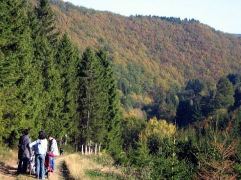 BISOstbelgien Wandern Herbst 03(c)eastbelgium com